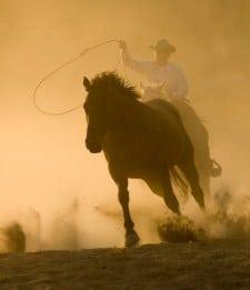 Cowboy chasing horse